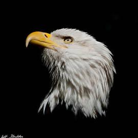 Jeff Goulden - Bald Eagle Looking Skyward