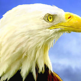 Bob Johnston - Bald Eagle Painting For Sale