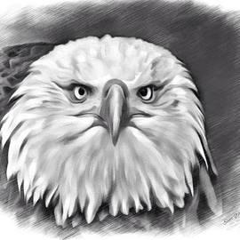 Scott Wallace  - Bald Eagle Sketch