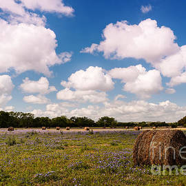 Silvio Ligutti - Bales of Hale - Quintessential Texas Hill Country - Luckenback
