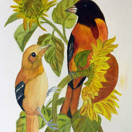 Donna Walsh - Baltimore Oriole