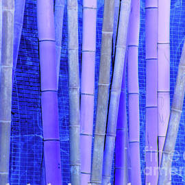 Joe Jake Pratt - Bamboo Curtain