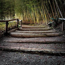 Scott Hill - Bamboo Garden