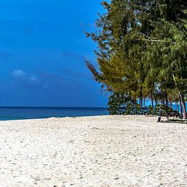 Jijo George - Bamboo Island