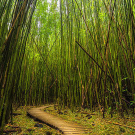 Andrew Shoemaker - Bamboo Journey