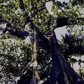Kasha Baxter - Banyan Wider Canopy