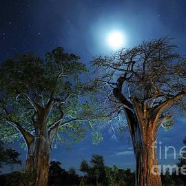 Tom Schwabel - Baobabs at Night