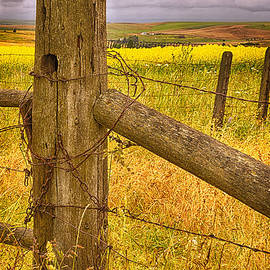 Priscilla Burgers - Barbed Wire on Fence Post