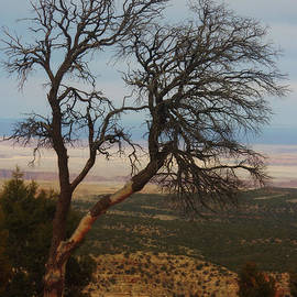 Valerie Loop - Bare Tree