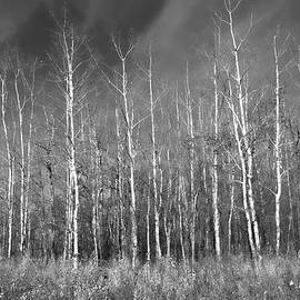 Allan Van Gasbeck - Bare Trees