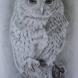 Giorgio  Smiroldo - Bared Owl