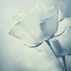 Georgiana Romanovna - Barely There Rose