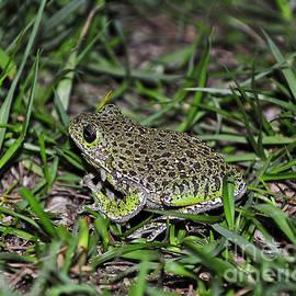 Al Powell Photography USA - Barking Tree Frog