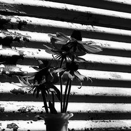 Tina M Wenger - Barn Flowers At Dusk