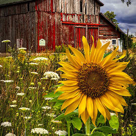Debra and Dave Vanderlaan - Barn Meadow Flowers