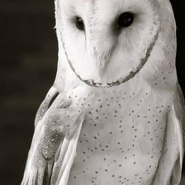 Elisa Yinh - Barn Owl