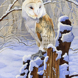 Anthony Forster - Barn Owl in Snow