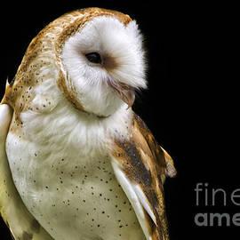 Sharon Ely - Barn Owl