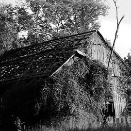 Dwight Cook - Barn without roof