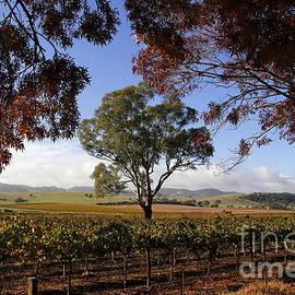John Wallace - Barossa Landscape Australia