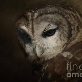 Sue Fulton - Barred Owl artwork