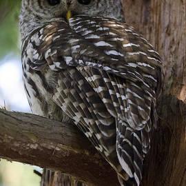 Bob Christopher - Barred Owl