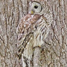 Jennie Marie Schell - Barred Owl Camouflage