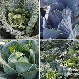 Carol Groenen - Basic Greens Collage