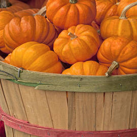 Regina Geoghan - Basket of Pumpkins