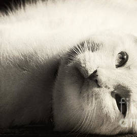 Pam  Holdsworth - Basking In The Sun