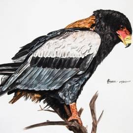 Tracey Beer - Bateleur Eagle