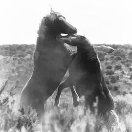 Wes and Dotty Weber - Battling Stallions D9422