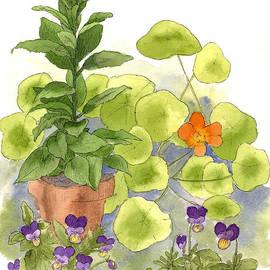 Cathie Richardson - Bay Tree Nasturtiums
