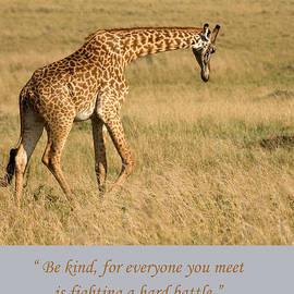 Chris Scroggins - Be Kind Plato Quote