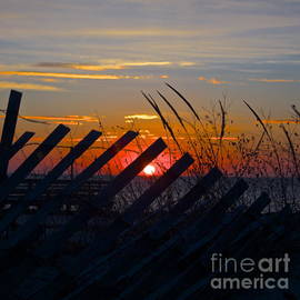 Amazing Jules - Beach Fence