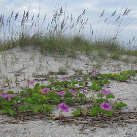 Ellen Meakin - Beach Flowers