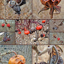 Mother Nature - Beach Rose Hips - Woods Hole - Cape Cod