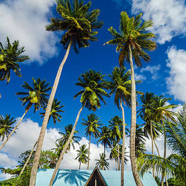 Jess Kraft - Beach Shack and Palms