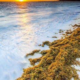 Sebastian Musial - Beach Sunrise