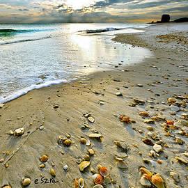 Eszra Tanner - Beach Sunset and Seashells
