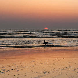 Mike Santis - Beach Sunset