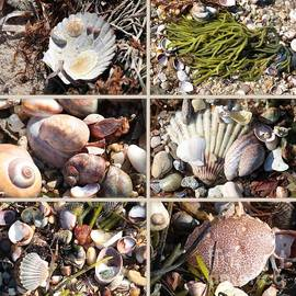 Carol Groenen - Beach Treasures