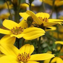 Bruce Bley - Beams of Yellow