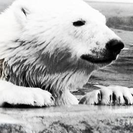 Kathleen Struckle - Bear Cub In Pool