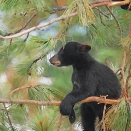 Ernie Echols - Bear Cub in Tree 2
