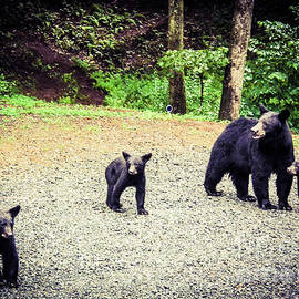 Jan Dappen - Bear Family Affair