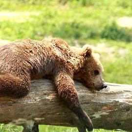 Geraldine Scull   - Bears