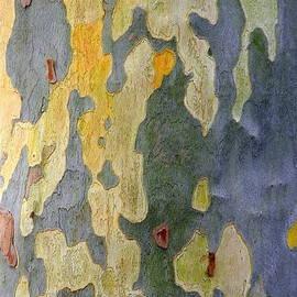 Kathy Barney - Beautiful Bark is Natures Own Graffiti