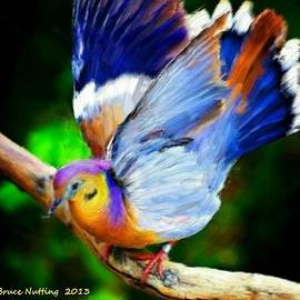 Bruce Nutting - Beautiful Bird