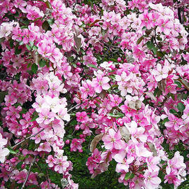 Aimee L Maher Photography and Art - Beautiful Blossoms